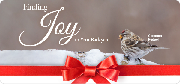 Joy of Bird Feeding